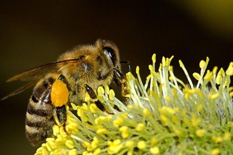 Dzikie pszczoły