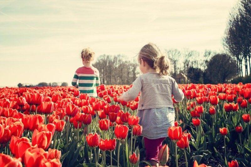 Najpiękniejsze kwiaty wiosny